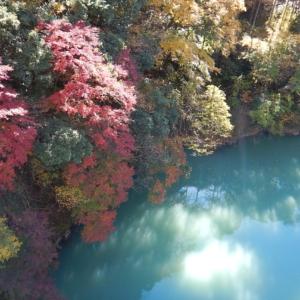 白丸湖の紅葉がピークを迎えました