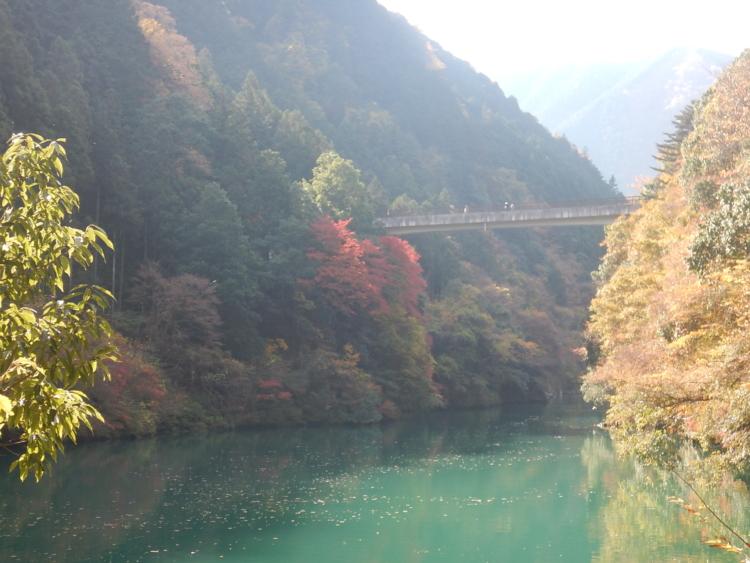 白丸湖の紅葉は今週末まで楽しめます