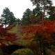 塩船観音寺の紅葉が見頃です